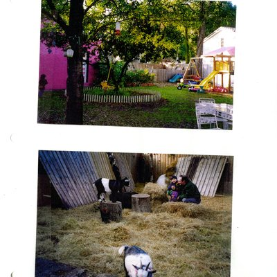 Two photos of goats in backyard with playground equipment.